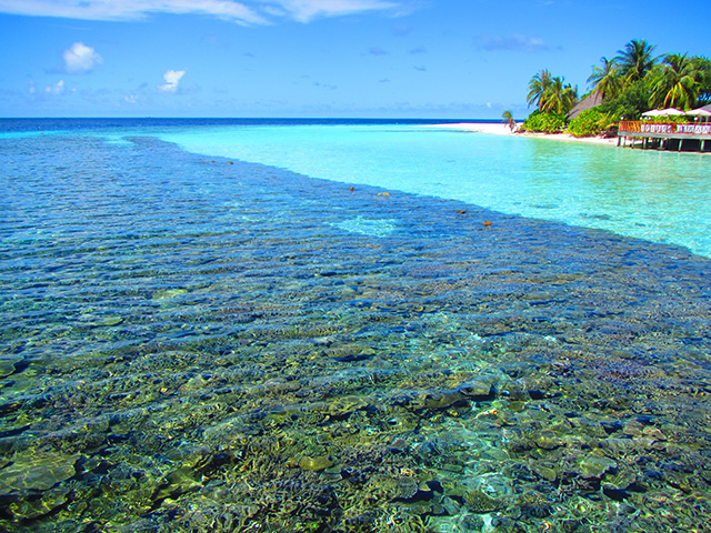 アンガガのビーチの珊瑚