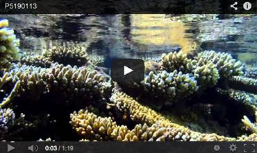 ハウスリーフの干潮時の動画