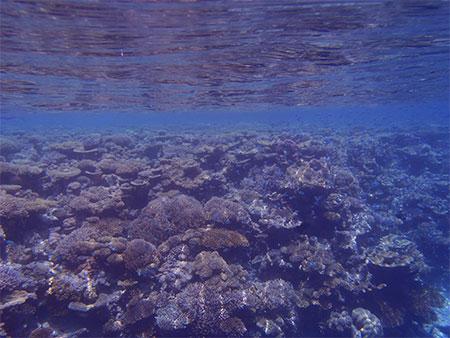 ヴィラメンドゥの浅瀬の珊瑚