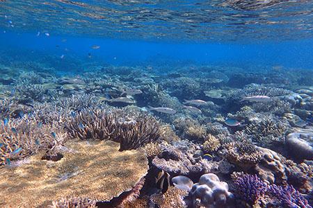 モルディブの枝珊瑚とテーブル珊瑚