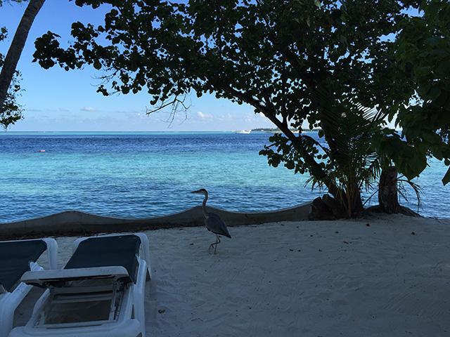 お部屋の前のビーチ