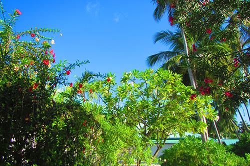 南の島の木々