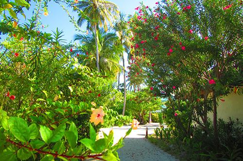 ヴィラメンドゥ島内の景色